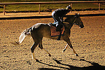 LOUISVILLE, KY - APRIL 20: Royal Obsession (Tapit x Rote, by Tiznow) exercises at Churchill Downs, Louisville, KY while preparing for the Kentucky Oaks. Owner Stonestreet Stables LLC, trainer Steven M. Asmussen.(Photo by Mary M. Meek/Eclipse Sportswire/Getty Images)