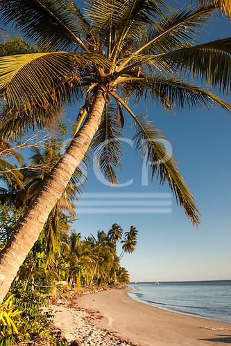 Itaparica Island, Bahia State, Brazil. Cacha Pregos. Palm trees along the beach. Cover shot.