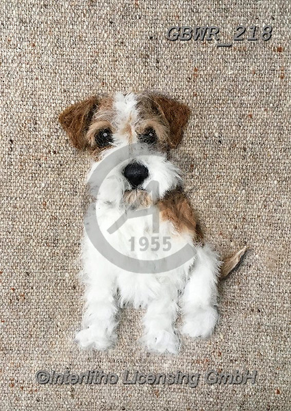 Simon, REALISTIC ANIMALS, REALISTISCHE TIERE, ANIMALES REALISTICOS, innovative, paintings+++++SharonS_RoughHairedJackRussel,GBWR218,#a#, EVERYDAY dogs,breeds of dog,