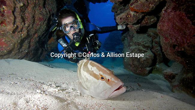 Diver and Nassau grouper, Little Cayman