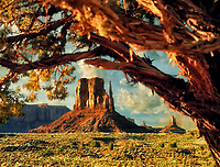 West Mitten as seen through tree branches. Monument Valley. Arizona.