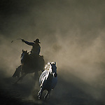 cowboy and white horse running with cowboy on right edge of photo
