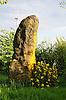 """Der ca. 400 Jahre alte Menhir """"Langer Stein"""" von Ober-Saulheim im Abendlicht, früher Gerichtsstätte, Versammlungsort, Wegekreuz,  Höhe 7,40 m (überirdisch  und unterirdisch jeweils 3,70 m), größter Menhir Rheinhessens"""