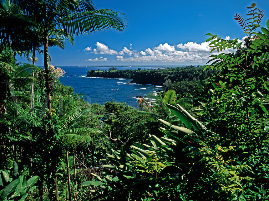 A luxury liner in the distance sits in Hilo Bay, Hawaii, framed here by the lush tropical vegetation of the Hamakua Coast.