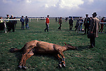Dead race horse at the Grand National course, Aintree 1980s. Had to be shot because of a bad fall. 1980s UK.
