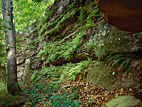 The canyon in Portland Arch Nature Preserve is an ideal environment for ferns to flourish.