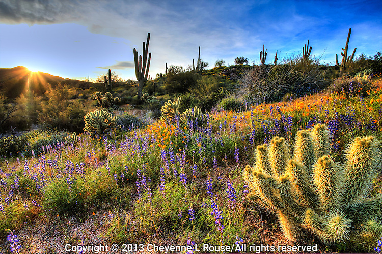 Magical Wildflowers in Arizona