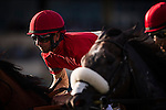 HALLANDALE FL - FEBRUARY 27: Jockey, Corey Lanerie  races in the Palm Beach Stakes at Gulfstream Park on February 27, 2016 in Hallandale, Florida.(Photo by Alex Evers/Eclipse Sportswire/Getty Images)
