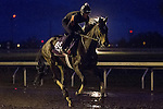 October 28, 2015:  Harmonize, trained by William I. Mott and owned by Larkin Armstrong, exercises in preparation for the Breeders' Cup Juvenile Fillies Turf at Keeneland Race Track in Lexington, Kentucky on October 28, 2015. Jon Durr/ESW/CSM