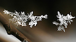 Snowflakes caught in mid-air on a single strand of natural spider's silk. made January 26, 2010 in Pittsburgh, PA USA by Jim Mendenhall.
