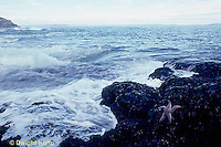 EC02-018z  Ocean - waves breaking, beach with starfish on rocks - Acadia National Park, Maine