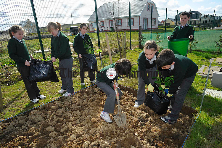 Roisin Flynn, Gemma O Neill, Emma Coughlan,  Aoibhe King, Cormac Byrne, Katelyn Cambell and Jamesie O Connor working on their Spud Challenge at Annagh National School. Photograph by John Kelly.