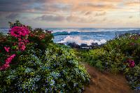 Bougainvillea and seashore. Kauai, Hawaii