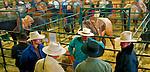 Cowboys at the horse auction, Maple Creek, Saskachewan