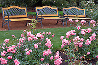 Royal Bonica roses and three benches. Heirloom Gardens. Oregon