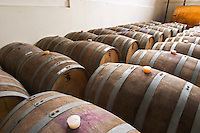 Barrels for storing the wine in wood. Bodega Castillo Viejo Winery, Las Piedras, Canelones, Uruguay, South America