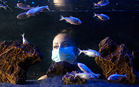 BNPS.co.uk (01202 558833)<br /> Picture: ZacharyCulpin/BNPS<br /> <br /> Pictured: The Museum of the Moon exhibition also features blind cave fish.<br /> <br /> A slender loris can be seen stargazing as part of a new attraction at a British safari park showing off its nocturnal animals.<br /> <br /> The tiny 10ins long, 275 grams primate, which is native to India, has huge brown eyes to hunt insects in the dark.<br /> <br /> The creatures, which spend most of their lives in trees but can't jump, are endangered in the wild due to a loss of habitat and poaching.<br /> <br /> Longleat Safari Park in Wilts is looking after a male and female of the species in an indoor enclosure set against the backdrop of a 20ft suspended replica of the moon by UK artist Luke Jerram.