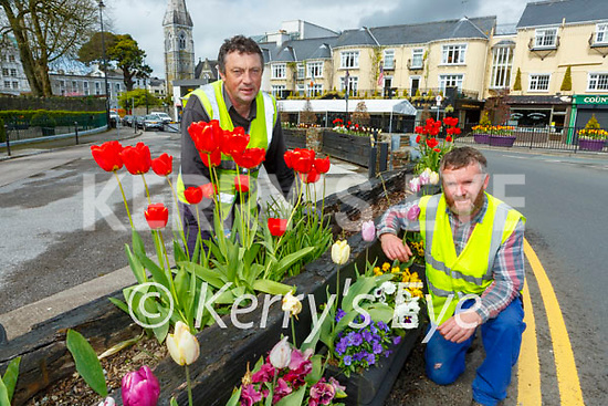 Denis Doody and John O'Shea left tending to the tulips in Killarney on Monday