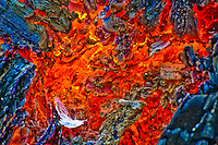 """LONESOME DOVE""<br />