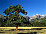 View from Glacier Basin Campground in Rocky Mountain National Park, Colorado, USA