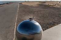A toy dinosaur sits atop a large decorative metal ball at the intersection of par course paths at the San Leandro Marina Park.