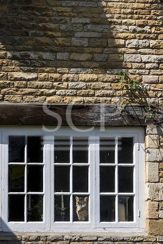 Apethorpe, Northamptonshire, England. A cat looking out of a cottage casement window.