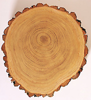 Cross section of a tree.