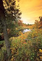 Savannah, Wharton State Forest, Pine Barrens, New Jersey