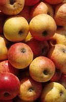 Europe/France/Auvergne/12/Aveyron/Villefranche-de-Rouergue: Pommes sur le marché de la place Notre-Dame