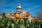 April 12, 2017; Main Building and tulips (Photo by Matt Cashore/University of Notre Dame)