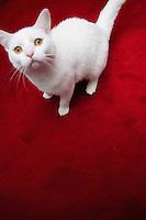 Even the cat coordinates with the colour scheme of an elegant loft in Paris
