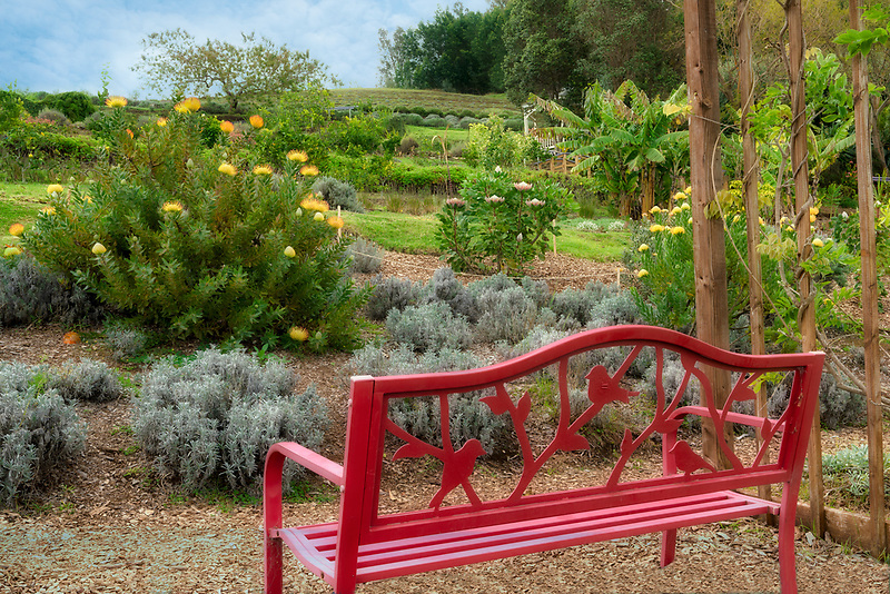 Bench in gardens at Ali'i Kula Lavender Farm. Maui, Hawaii