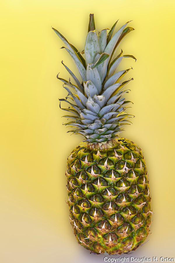 Pineapple (Ananas comosus) on a yellow/gold, pineappley background with backlight.