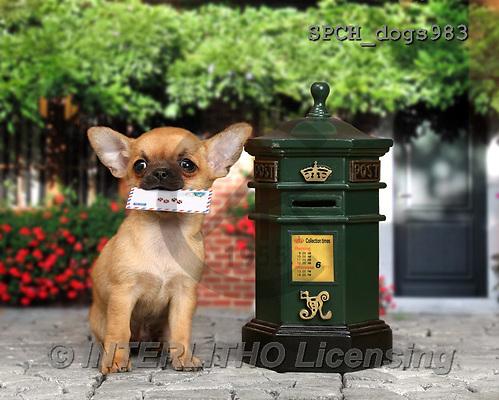 Xavier, ANIMALS, REALISTISCHE TIERE, ANIMALES REALISTICOS, dogs, photos+++++,SPCHDOGS983,#A#