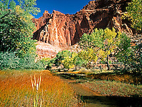 A lone cattail grows near the Fremont Riiver in Capitol Reef Naitonal Park<br />