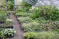 Digging Dog Nursery shady greenhouse
