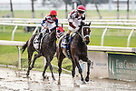 NEW ORLEANS, LA - JANUARY 21:<br />  Farrell #3 ridden by Channing Hill wins the SILVERBULLETDAY STAKES at the Fairgrounds Race Course on January 21,2017  in New Orleans, Louisiana. (Photo by Steve Dalmado/Eclipse Sportswire/Getty Images)