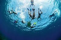Green sea turtle (Chelonia mydas) with snorkelers. Marsa Alam. Res Sea (Egypt)