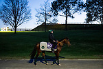 November 3, 2020: Mighty Gurkha, trained by trainer Archie Watson, exercises in preparation for the Breeders' Cup Juvenile Turf Sprint at  Keeneland Racetrack in Lexington, Kentucky on November 3, 2020. Alex Evers/Eclipse Sportswire/Breeders Cup