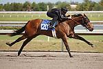#120Fasig-Tipton Florida Sale,Under Tack Show. Palm Meadows Florida 03-23-2012 Arron Haggart/Eclipse Sportswire.