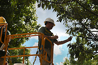 Bentonville Parks and Recreation staff Jimmy Hutchison puts up Christmas lights, Monday, September 13, 2021 at the Downtown Square in Bentonville. They are installing about 35 miles of Christmas lights along the trees and landscaping at the square. They are also adding additional decorations at Lawrence Plaza. Check out nwaonline.com/210914Daily/ for today's photo gallery. <br /> (NWA Democrat-Gazette/Charlie Kaijo)