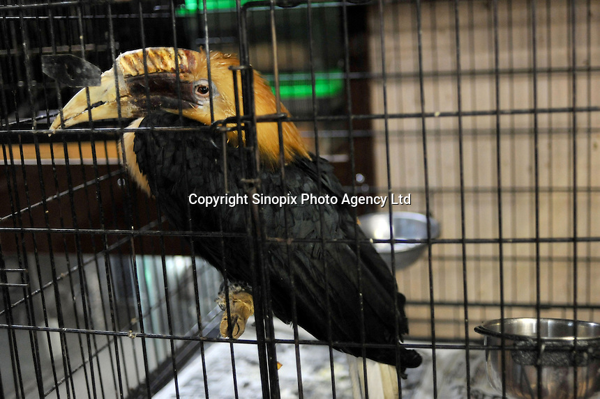A Hornbill for sale at the 'Noah Inner City Zoo', a pet shop that sells exotic animals. A number of species of hornbill are threatened with extinction. The 'zoo' claims to have more than 300 species for sale, many of which are rare and some are endangered