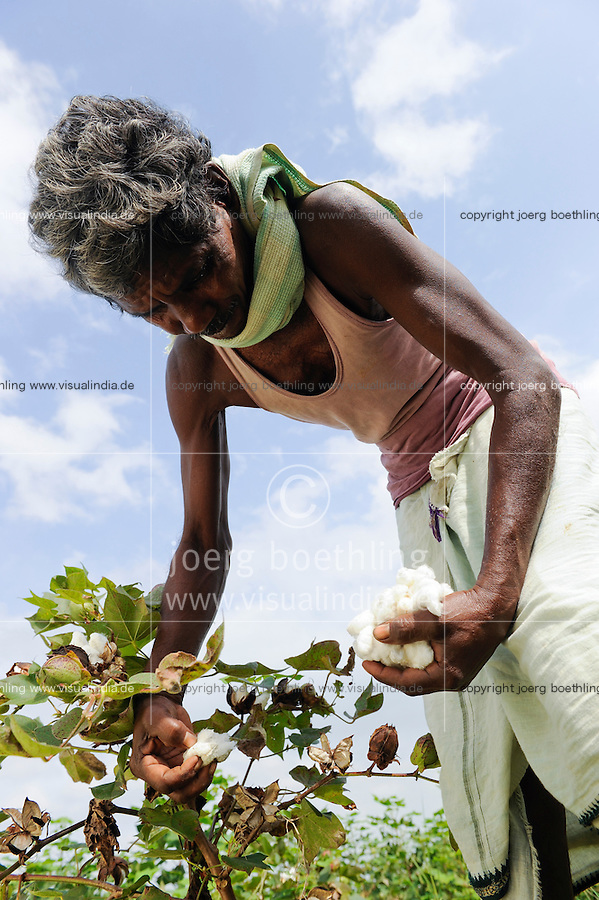 INDIA Odisha, fairtrade cotton farmer of Agrocel near Rayagada, farmer harvest cotton  Dongria Kondh tribe /<br />