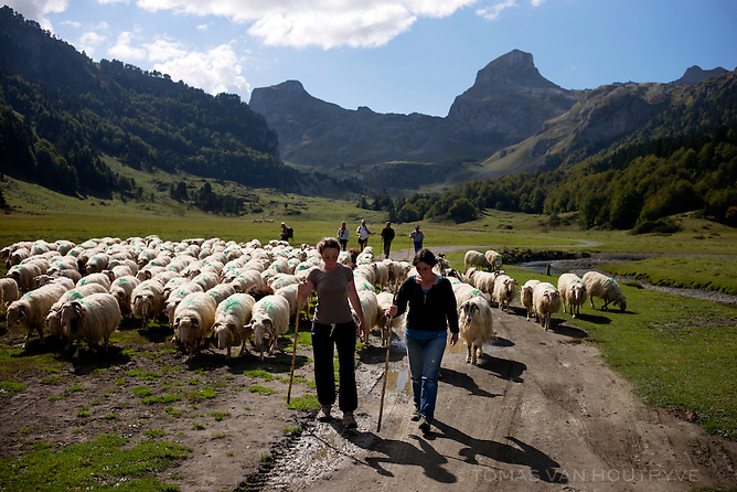 Isabelle Vacosait, left, et Anne Rolland, right, lead sheep down the mountains from their summer pastures at the end of the summer grazing season in Vallée d'Ossau, in the Pyrenees in France on Oct. 3, 2014.