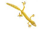 Lined Leaf-tailed Gecko (Uroplatus lineatus). From Masoala National Park, Madagascar.