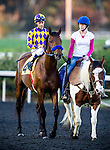 Candy Boy ridden by Gary Stevens at the Cash Call Futurity on December 14, 2013 at Betfair Hollywood Park in Inglewood, California .(Alex Evers/ Eclipse Sportswire)