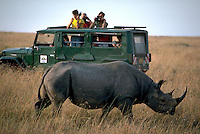 African, wild animal. A large Rhinoceros stands near a safari vehicle or Land Rover while the car occupants observe and take photographs. Masai Mara, Kenya Masai Mara Plains.