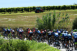 The peloton cross the Po Valley during the 101st edition of Milan-Turin 2020 running 198km from Mesero to Stupinigi (Nichelino), Italy. 5th August 2020.<br /> Picture: LaPresse/Fabio Ferrari | Cyclefile<br /> <br /> All photos usage must carry mandatory copyright credit (© Cyclefile | LaPresse/Fabio Ferrari)