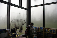 A woman looks at books about Glacier National Park available at the Logan's Pass visitors' center on Going to the Sun Road in Glacier National Park.  A transparent decal of a grizzly bear adorns a nearby window.