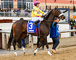 OZONE PARK, NY - NOVEMBER 26, 2016: Libby's Tail #3 in the post parade for the  Grade 2 Demoiselle Stakes for 2-year old fillies, at Aqueduct Racetrack . (Photo by Sue Kawczynski/Eclipse Sportswire/Getty Images)